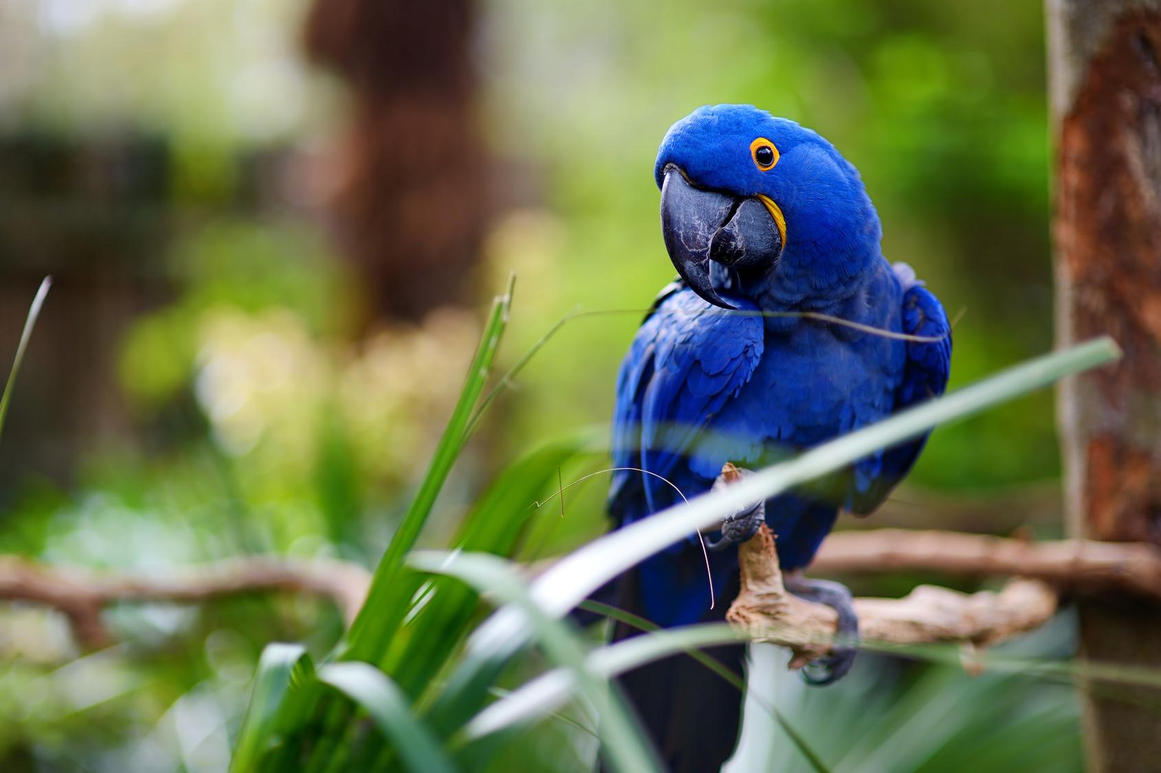 https://mlahvet.com/wp-content/uploads/2016/08/Exotics_Bird.jpg