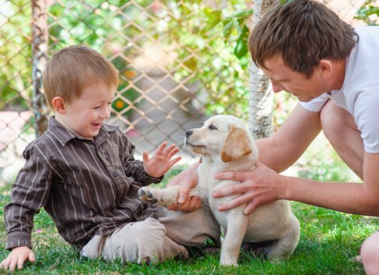 father and son playing with a puppy Labrador.