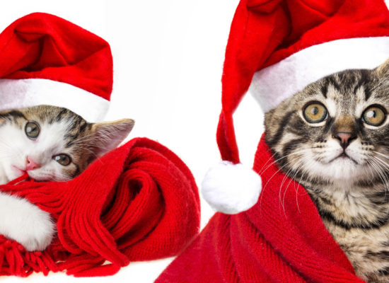 cat with santa cap