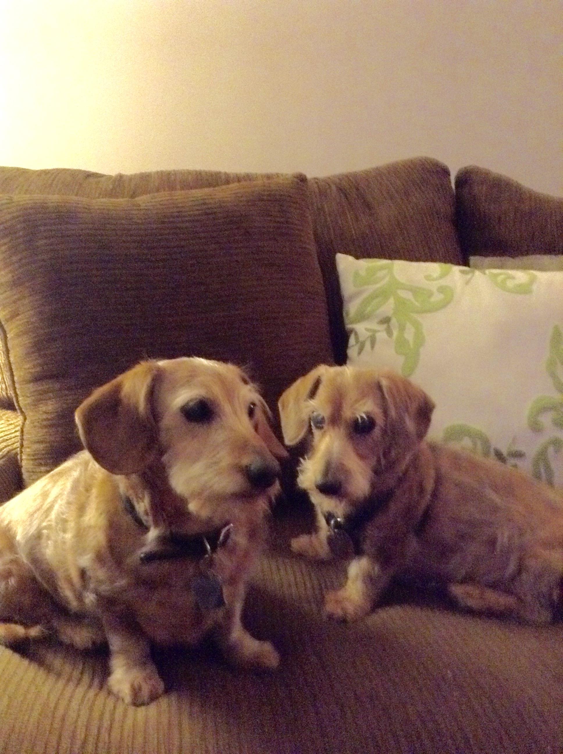 Duke & Pretzel