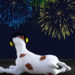 New Year's Eve Pet Hazards